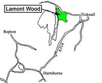 Lamont_wood_forest_in_australia